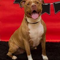 Adopt A Pet :: Princess - Elkhorn, WI