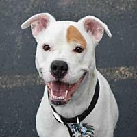 Adopt A Pet :: ALEC - Decatur, IL