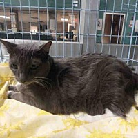Adopt A Pet :: WINNIE - Chatsworth, CA