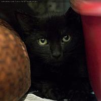 Adopt A Pet :: BEYTER - Houston, TX