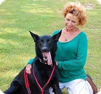 German Shepherd Dog Mix Dog for adoption in Preston, Connecticut - Sadie II