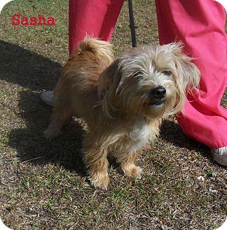 Terrier (Unknown Type, Small) Mix Dog for adoption in Slidell, Louisiana - Sasha