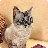 Adopt A Pet :: Joey &Zoey - Howell, NJ