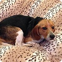 Adopt A Pet :: Crockett - Richmond, VA