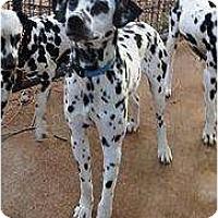 Adopt A Pet :: Peanut - Newcastle, OK