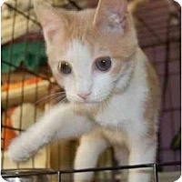 Adopt A Pet :: Dodger - Chesapeake, VA