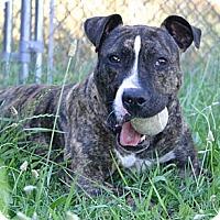 Adopt A Pet :: Jamie-$100 ADOPTION GRANT - Auburn, CA