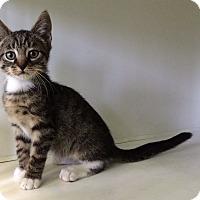 Adopt A Pet :: Thomas - New York, NY