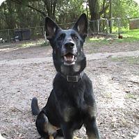 Adopt A Pet :: Rosie - Green Cove Springs, FL