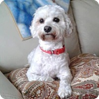 Adopt A Pet :: Sandy - Mississauga, ON