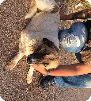 Cattle Dog Mix Dog for adoption in Toronto, Ontario - RITSA