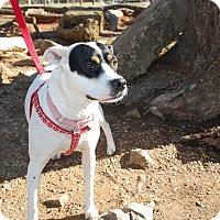 Adopt A Pet :: Annie - Allentown, PA