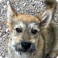 Adopt A Pet :: FEATHER - Hurricane, UT