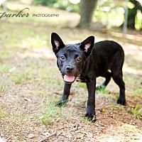Adopt A Pet :: Helen - Marietta, GA
