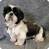Adopt A Pet :: Magnum Miller - Urbana, OH