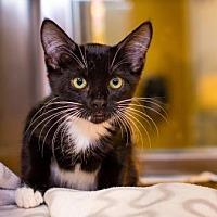 Adopt A Pet :: Johnny - Palm Springs, CA