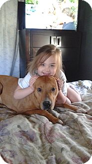 Rhodesian Ridgeback/American Staffordshire Terrier Mix Dog for adoption in Lynn, Massachusetts - Mitzo