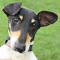 Adopt A Pet :: Squiggy Fostered (Mariah) - Troy, IL