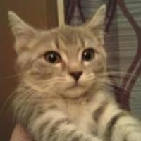 Adopt A Pet :: DELETE - Harrisonburg, VA