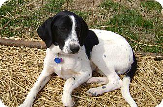Found: Black & White & Brown 'Hound' Dog - Michigan Humane ...  |Black And White Hound Dog