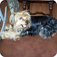 Adopt A Pet :: Katie - Dartmouth, MA
