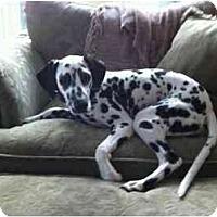 Adopt A Pet :: Grace - League City, TX