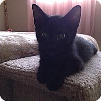 Adopt A Pet :: Lucky - Chandler, AZ