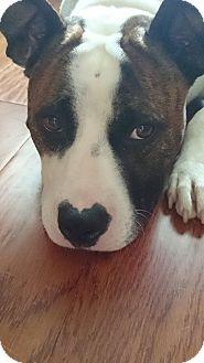 Staffordshire Bull Terrier Mix Dog for adoption in Raeford, North Carolina - Roxy