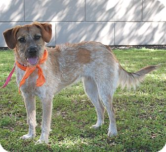 Terrier (Unknown Type, Medium) Mix Dog for adoption in Houston, Texas - Penny