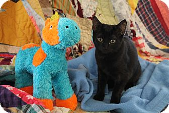 Domestic Shorthair Cat for adoption in Marietta, Georgia - Mika