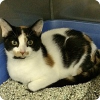 Adopt A Pet :: Mocha - Byron Center, MI