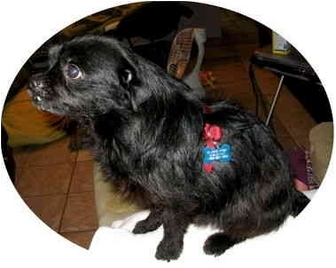 Terrier (Unknown Type, Small) Mix Dog for adoption in Philomath, Oregon - Sebastian