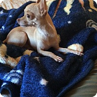 Adopt A Pet :: Tiny Tim - Surrey, BC