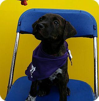 Terrier (Unknown Type, Medium) Mix Puppy for adoption in Detroit, Michigan - Saffron-Adopted!