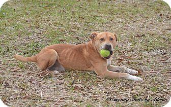 Adopt A Pet :: Waldo  - Henderson, NC
