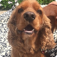 Adopt A Pet :: Levi - Santa Barbara, CA