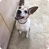 Adopt A Pet :: Tammy 2 - Chicago, IL
