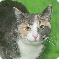 Adopt A Pet :: Ruby - Elmwood Park, NJ