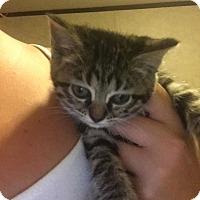 Adopt A Pet :: Pete - Somerset, KY