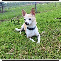Adopt A Pet :: Max- Finder Named - Lake Jackson, TX