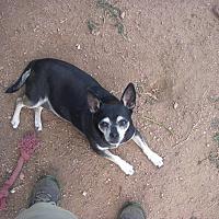 Adopt A Pet :: Bella - Buchanan Dam, TX
