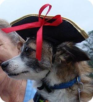 Pomeranian/Chihuahua Mix Dog for adoption in Washington, D.C. - Ben Ben