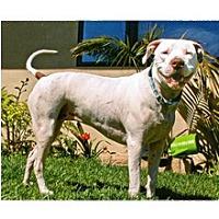 Adopt A Pet :: Shelby - Santa Barbara, CA