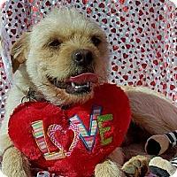 Adopt A Pet :: Juero - Ranger, TX