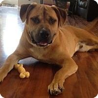 Adopt A Pet :: Harley - Sacramento, CA