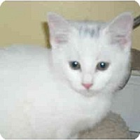 Adopt A Pet :: Sam & Scoot - Arlington, VA