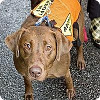 Adopt A Pet :: Cookie - Cumming, GA
