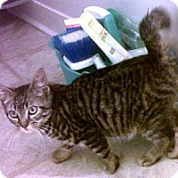 Adopt A Pet :: Cruz - Bayonne, NJ