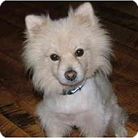 Adopt A Pet :: JC - Glastonbury, CT