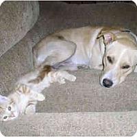 Adopt A Pet :: Lucky - Fowler, CA